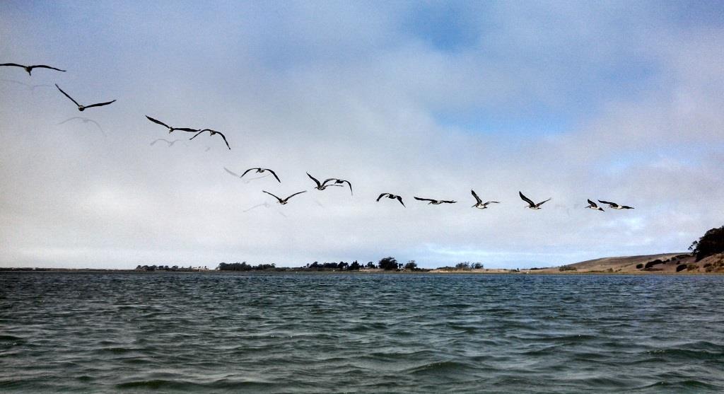 Pelican Squadron ... ATTACK!!