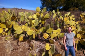 a grove of the largest cacti that I have ever seen.