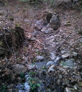 We did a little bushwacking in the beginning a found a creek. Running water in a drought!