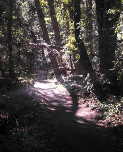 This is such a standard looking trail in the park.  Nice and shady but with some sun peaking through.
