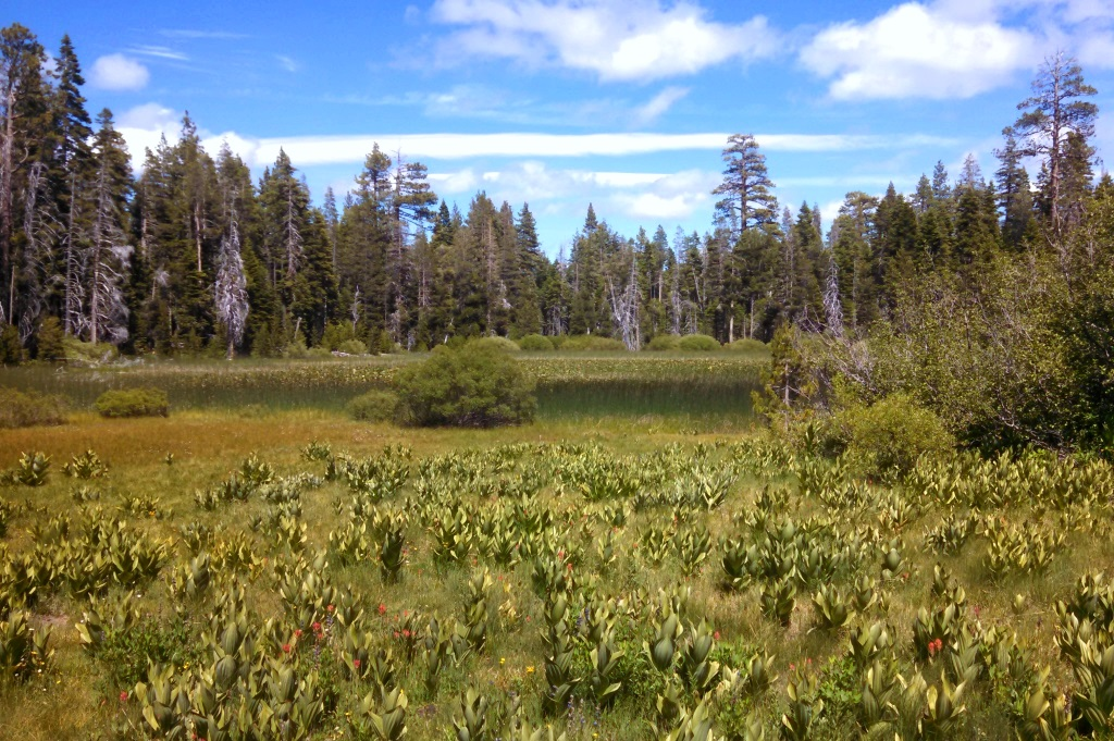 And the pond from our hike.  Tahoe is rather amazingly blue all around.