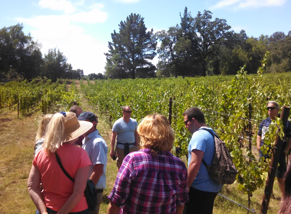 This was pretty much what most of the hike looked like, a group of 40 or so people all at least a decade older than us and lots of grapevines
