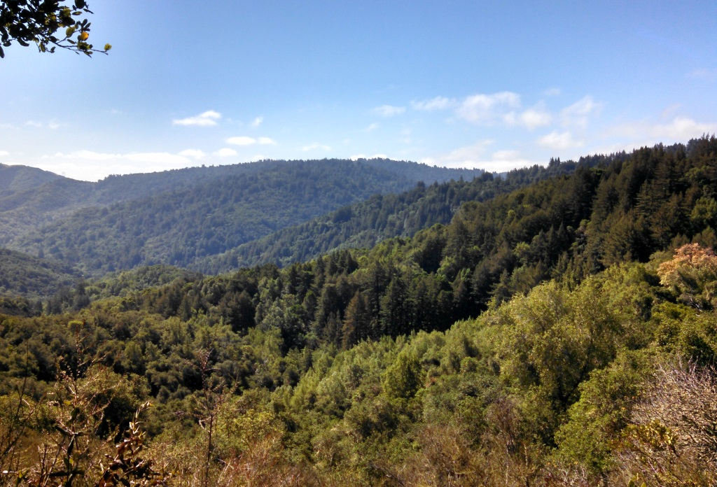 There was just enough areas without cover on the hike to give a view of the surroundings