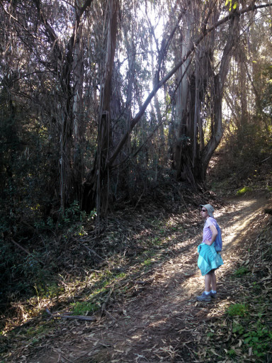 Eucalyptus forest In the open space. Jasmine is trying to muster up her inner koala to satiate her hiking hunger.