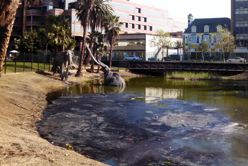 The tar pits are still active today. But since this is America they are completely fenced off, as noone wants to become the next specimen.