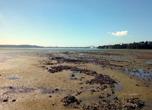 This is literaly th eflow of the bay. The tide is pretty serious here. also mussels -mmmm
