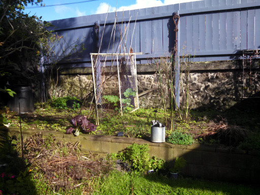 The garden, or currently weed patch. It will mostly be lettuce and root vegetables until the end of winter.