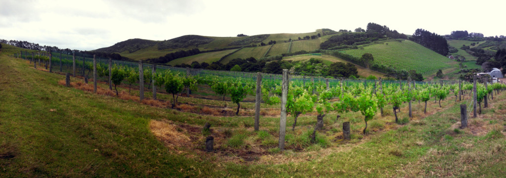 Wine Tasting! Waiheke has quite a few wineries and I think we made it to about a quarter of them.