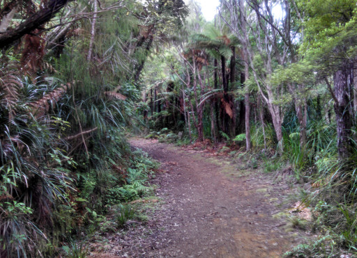 The standard trail of the day. Well the other half of the day was stairs, but I was too tired to take pictures then.