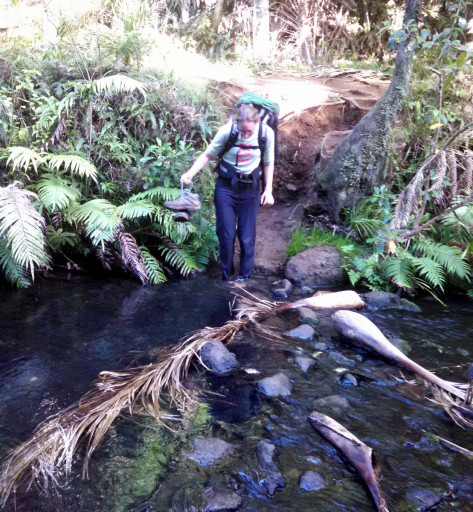 As always with NZ hikes numerous creek crossings were required. On this crossing I refilled our water and had to deal with a frisky eel. Just FYI an unexpected eel swimming on your leg is terrifying.