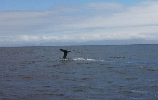 We spotted out first whale fairly quickly!