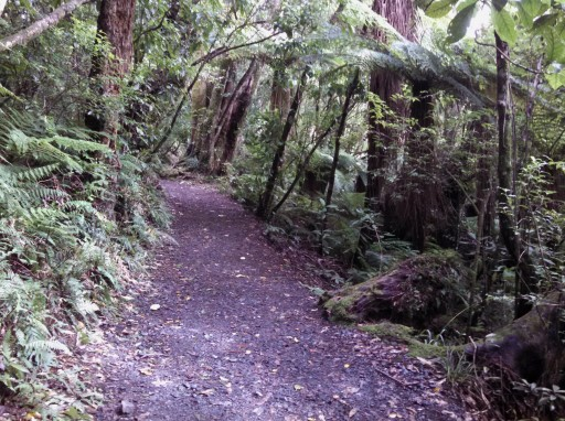 The typical trail for this hike. It's located in Tongariro National Park, so plenty of flora and fauna!