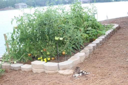 Tomato wall!