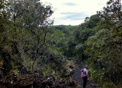 Rangitoto forest hike