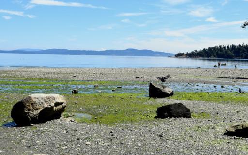 The Haro Strait is a bit calmer than Juan de Fuca