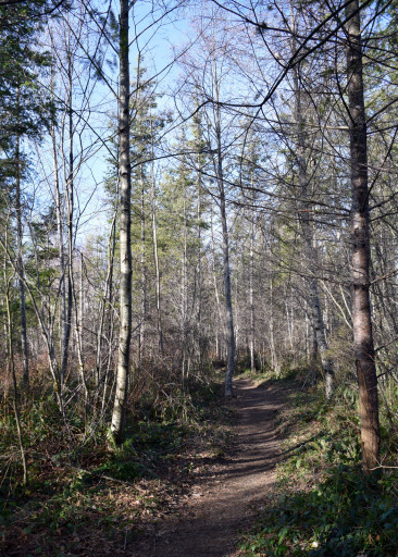 The early part of the trail was a open and airy.