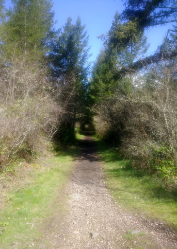 I like tree tunnel trails.