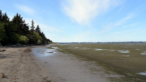The beach was very flat, so at low tide it was a trek to the water.