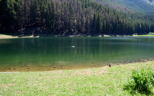 Alpine lake. Swimming Lloyd's pictured.