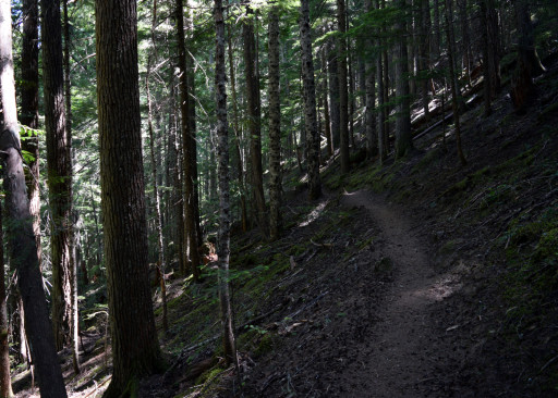 The trail was not that steep to walk up, but it was steep against the grain.