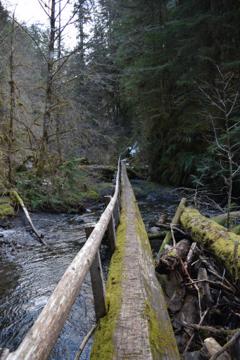 This was a singe tree bridge that was around 150 ft long, that is like 30 meters!