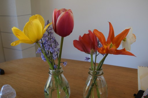 A couple different sorts of tulip, daffodils, and some purple flower I don't know. Up next are the rhododendrons and roses.