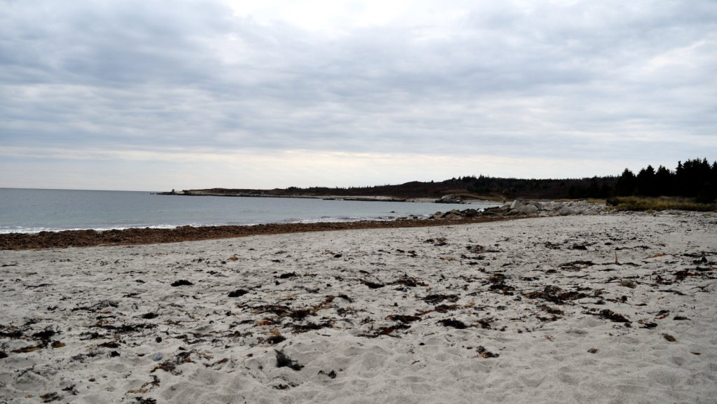 Nice sandy beach! Never mind the tonnes of seaweed.